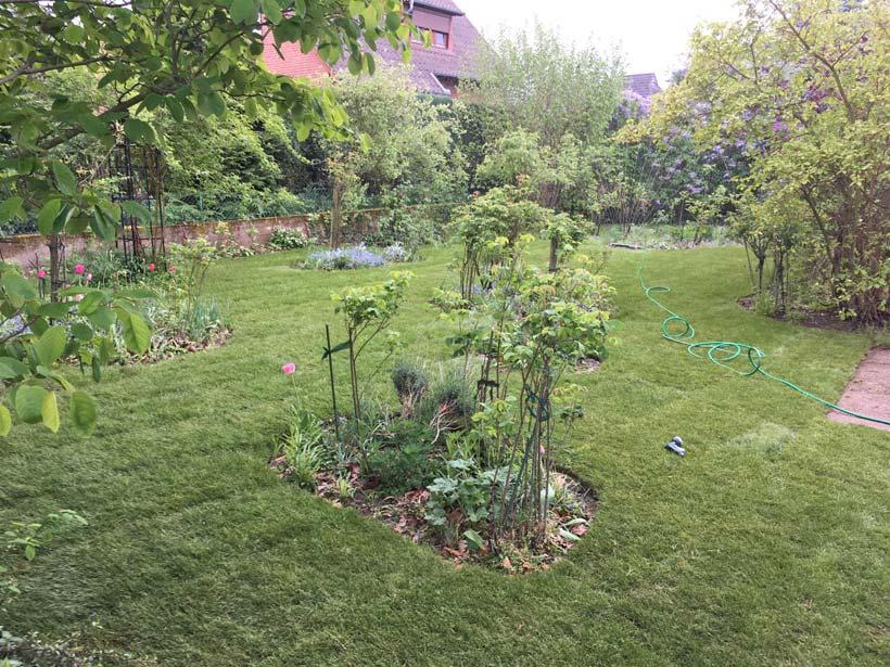 Garten Rollrasen Rasenhof Bienenbüttel