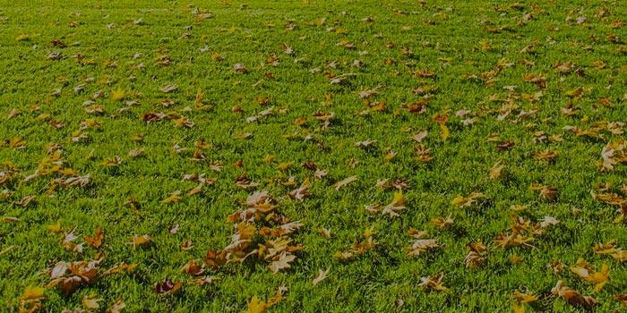 Rasenkalender Rasenhof Bienenbüttel